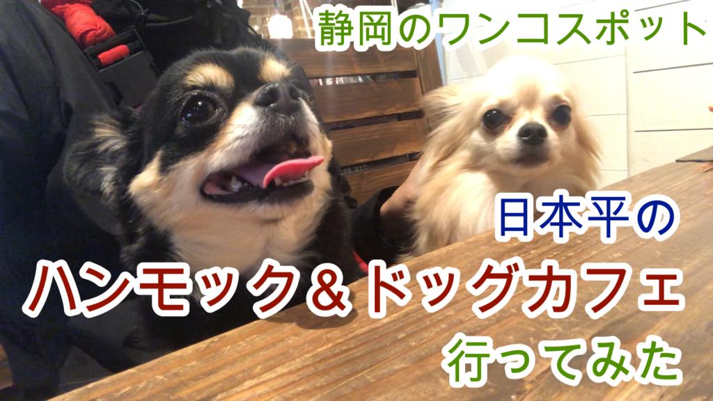 ワンコ・ペット同伴可のハンモック・ドッグカフェに行ってきた@静岡市日本平